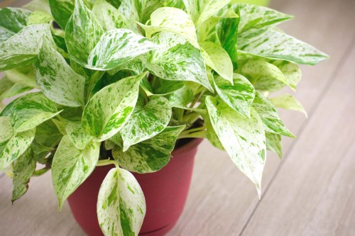 House Plants for Healthy Air: Eliminate Indoor Air Pollution
