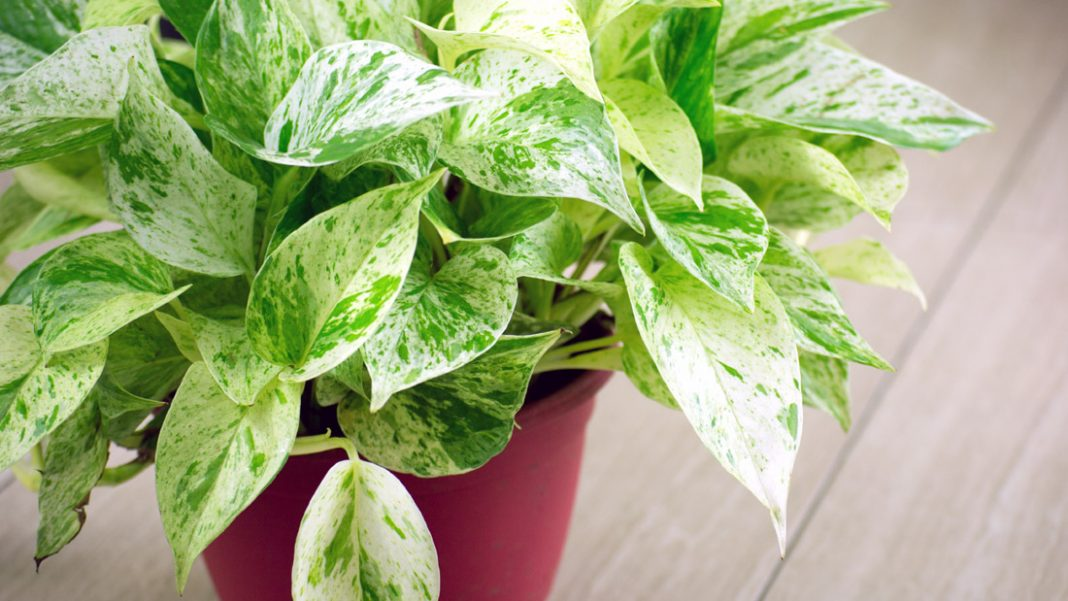Houseplants for Healthy Air from domesticsoul.com